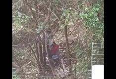 Novinha fazendo boquete no mato